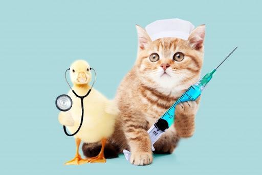 【コロナワクチン接種を実際に受けた!】医療従事者の副作用